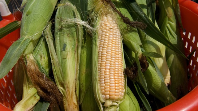corn.si